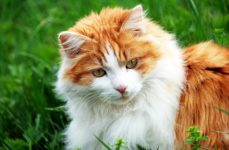Katze, Medikamente