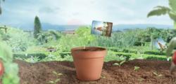 Tomatensamen gratis bestellen