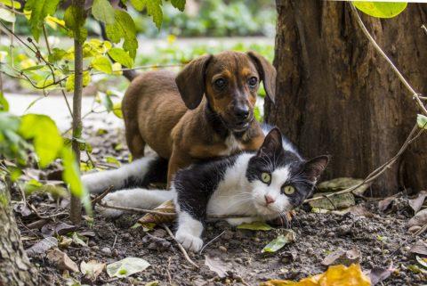 Gutschein und Gratisproben Tierfutter